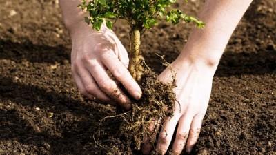 tree-planting-1531574150.jpg