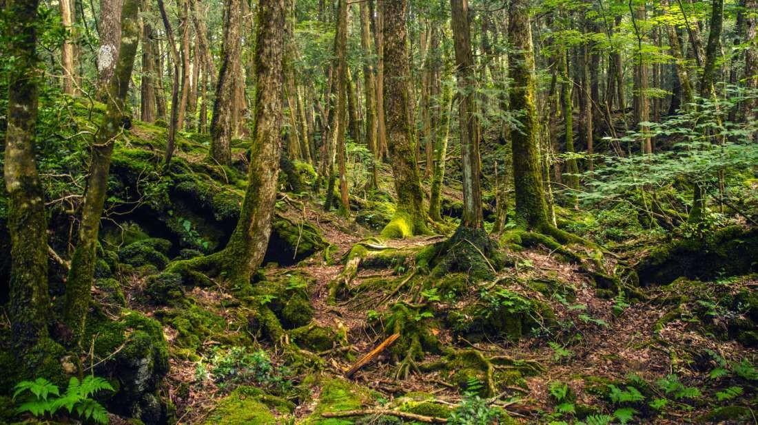 Forest-1542373754.jpg