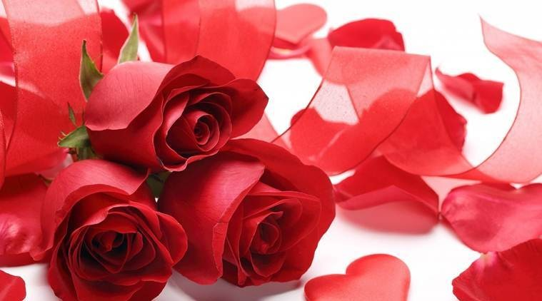 Rose-Day-1549526819.jpg