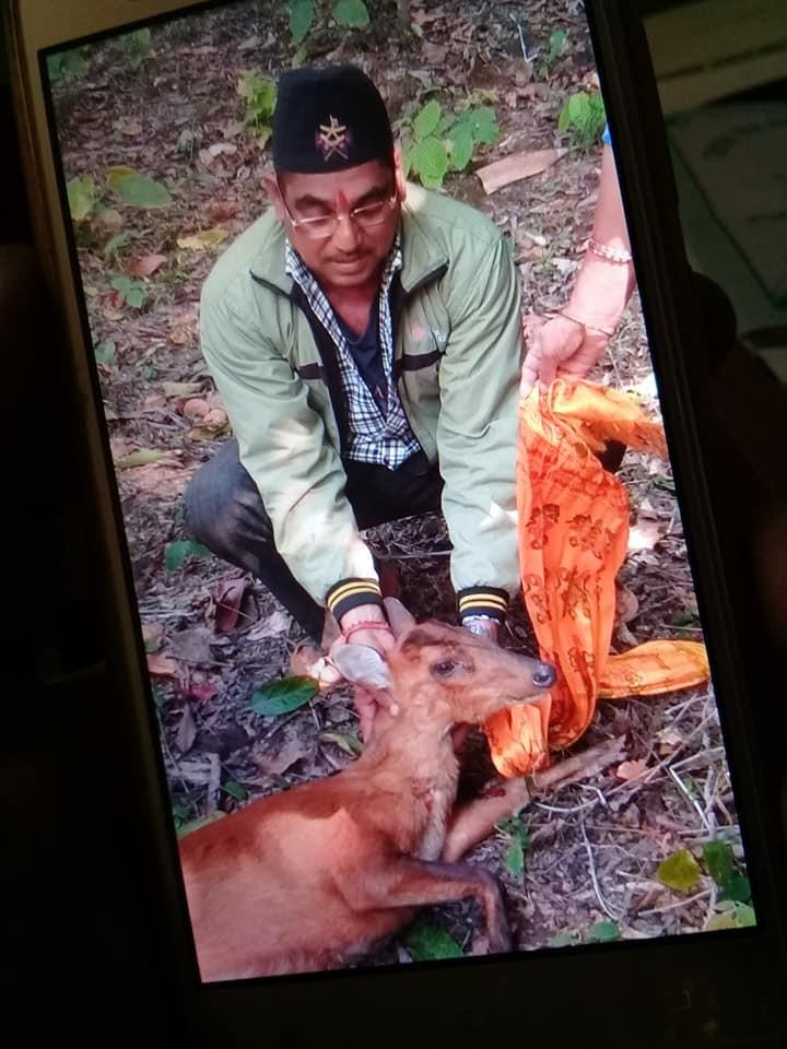 Deer-1549888928.jpg